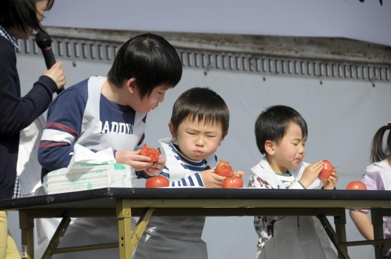 トマトの早食い競争の様子の写真3枚目